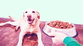 Top 10 Bad Dog Foods