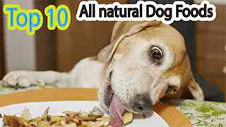 Top 10 All Natural Dog Foods